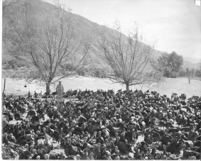 J. Arza, Turkeys, and Willow Trees